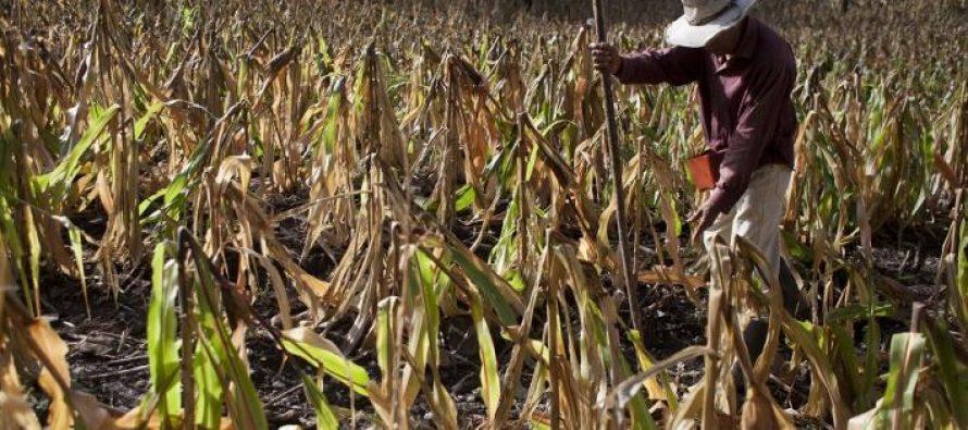 ONU Medio Ambiente y el BCIE unen esfuerzos en la lucha contra el cambio climático