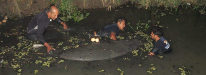 Recibe CONANP a manatí para rescate en Pantanos de Centla