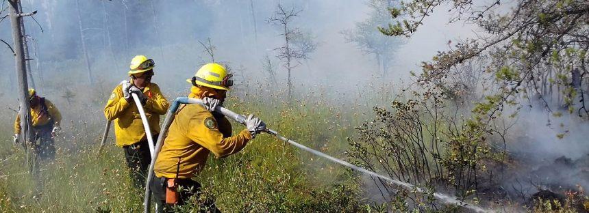 Superficie arbolada disminuye tras afectaciones por incendios forestales