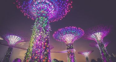 La travesía de Singapur para convertirse en un modelo de biodiversidad