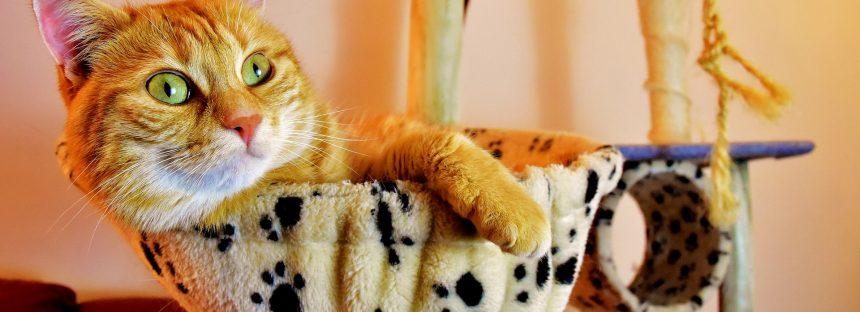 Un pueblo de Nueva Zelanda planea erradicar los gatos domésticos para proteger a los animales nativos