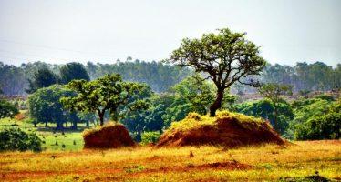 Nuevo reporte destaca casos exitosos de restauración de tierras áridas alrededor del planeta