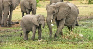 El primer santuario para elefantes maltratados de América del Sur cumple tres años
