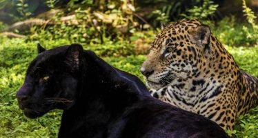 ONU Medio Ambiente y la Alianza Mesoamericana por la Biodiversidad acercarán la conservación al sector privado