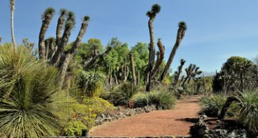 Jardines botánicos de México son centros de cultura ecológica