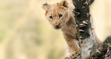 Crean el atlas de mamíferos más completo hasta el momento