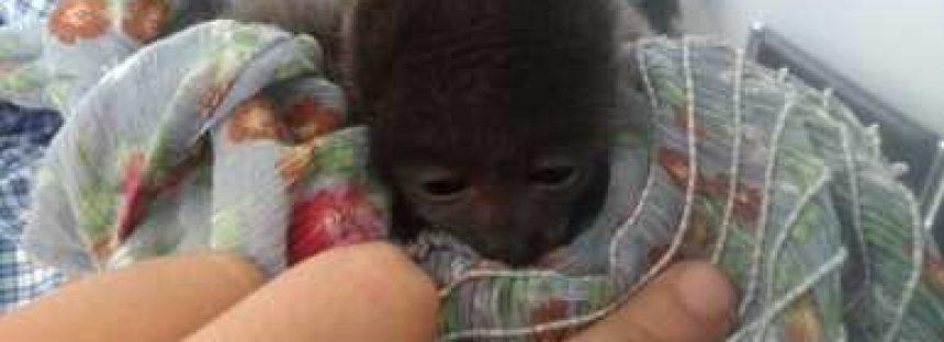 Cría de mono aullador y dos tucanes son asegurados en la central camionera de Tlaquepaque, Jalisco