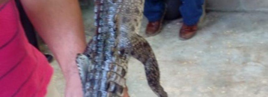Rescatan dos ejemplares de vida silvestre en Guerrero
