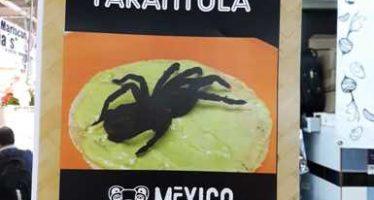 Aseguran cuatro tarántulas (Brachypelma vagans) silvestres muertas y listas para consumo en el restaurante México en el Paladar