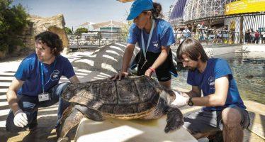 La tortuga boba llega a las playas españolas