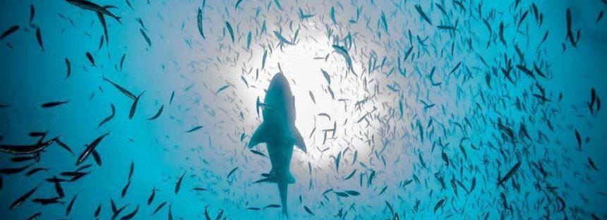 Océanos, sumidero de CO2