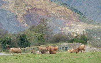 El ganado pasta en escombreras de minas contaminadas por arsénico en Asturias