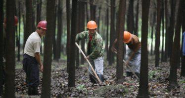 Apostar ya por la sostenibilidad: la única opción para las empresas