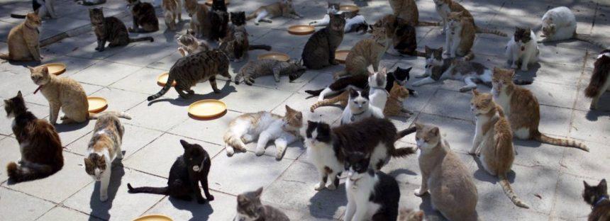 La mujer que vivía con 180 gatos, ¿amaba a los animales?