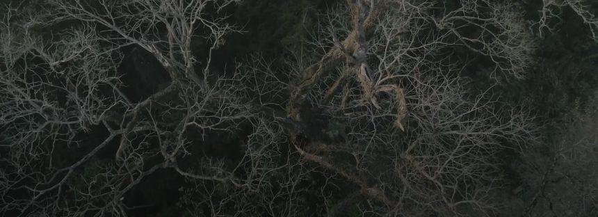 Salvar al árbol gigante de Paraguay