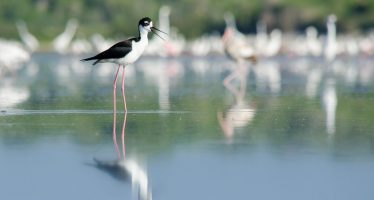 Día Mundial de las Aves Playeras: 6 de septiembre