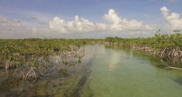 Fondo para el Cambio Climático financia proyecto de carbono azul en Áreas Naturales Protegidas