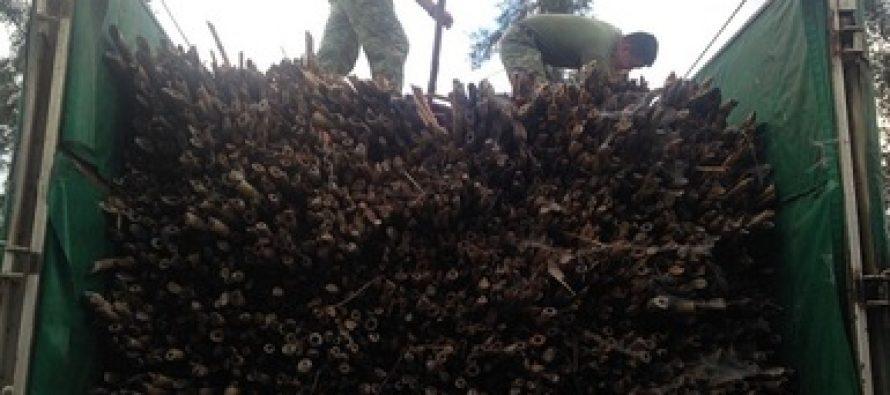 Donan 14 mil varas de Otate (Otatea acuminata) a militares de Jalisco.