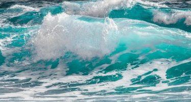 Ruido antropogénico submarino provoca daño irreversible en ecosistemas y especies oceánicas