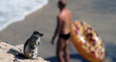 Cuanto más remota es una isla, más especies invasoras acoge