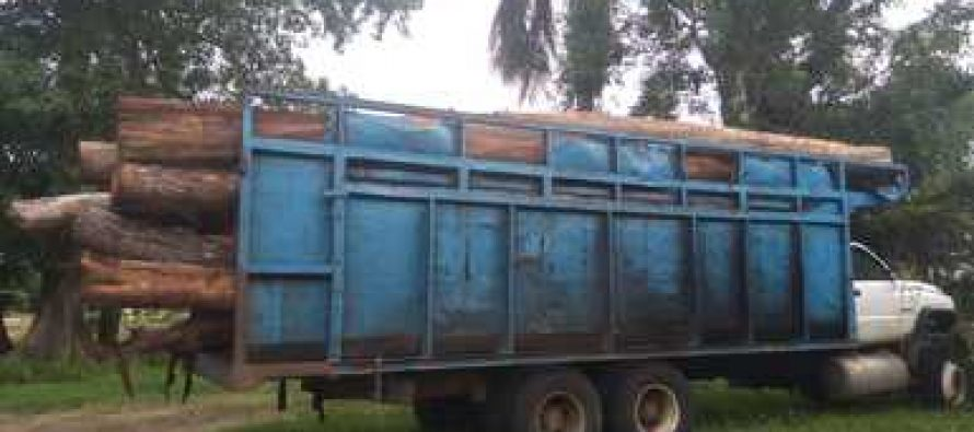 Detienen camión con maderas preciosas y dura tropical del ejido X-hazil, en Quintana Roo.