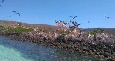 México desarrolla y ejecuta diversos esquemas para la protección de los ecosistemas marinos
