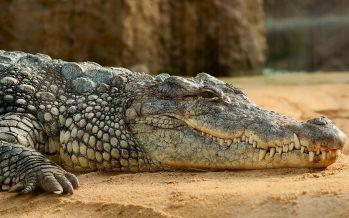 Reunión nacional de expertos en cocodrilos