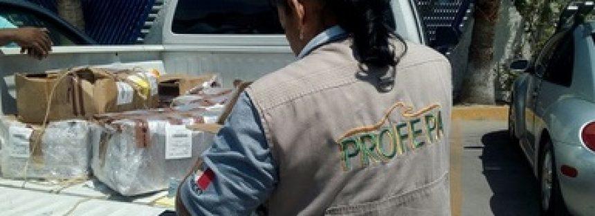 Identificación de 113 kg. De pepino de mar en el aeropuerto internacional de Tijuana, B.C.
