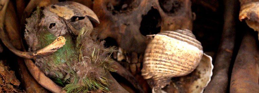 Descubren cabeza momificada de guacamaya de 2000 años de antigüedad en cueva Avendaños, Chihuahua