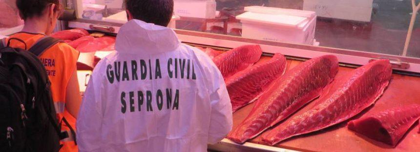 Macrooperación contra la venta de atún rojo ilegal: 79 detenidos y 80.000 kilos intervenidos