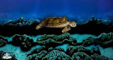 ¿Mujer o tortuga? ¿Qué ve usted en la imagen?