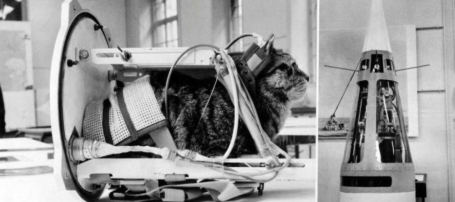 Félicette: la gata que salió de las calles de París para viajar al espacio