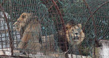 """Rescatados 12 animales de un zoo privado de Albania por """"malnutrición"""""""