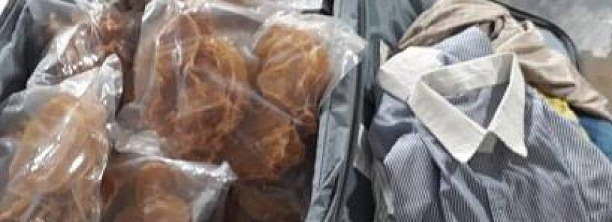 Aseguran 271 piezas de buche de totoaba en las instalaciones del aeropuerto internacional de México