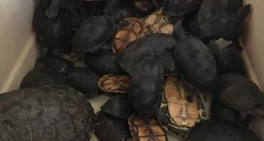 Aseguran 160 ejemplares de fauna silvestre abandonados en la central de autobuses de Puebla