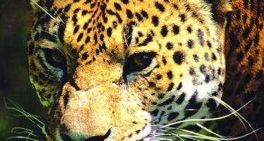 México cuida y protege especies prioritarias dentro de Áreas Naturales Protegidas