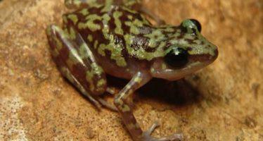 21 nuevas especies descubiertas en Áreas Naturales Protegidas de México