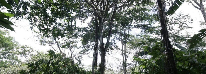 En el sector forestal, vamos por buen camino