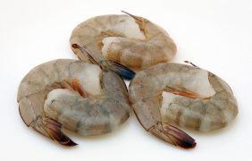 Crecimiento del camarón blanco en un estanque rústico a baja salinidad