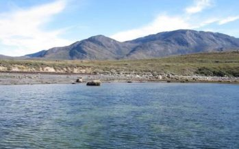 La expansión de praderas submarinas en el Ártico crea nuevos sumideros de carbono