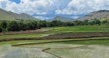 Los humedales están desapareciendo tres veces más rápido que los bosques
