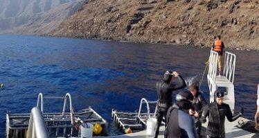 Intensifican acciones de vigilancia para protección del tiburón blanco