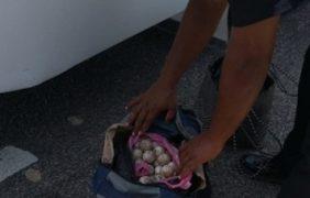 Implementan operativo carretero en Oaxaca y aseguran mil huevos de tortuga golfina