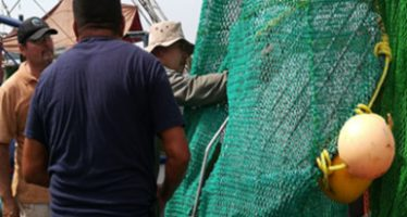Certifican dispositivos excluidores de tortugas en flota camaronera de altamar