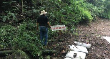 Predio es clausurado por ilegal cambio de uso de suelo en terrenos forestales