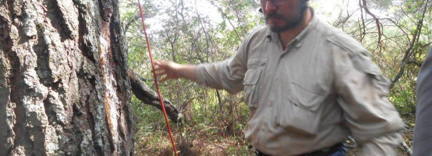 Alberto Gómez-Tagle: El cultivo de aguacate es un serio problema ambiental que implica una crisis en disposición de agua