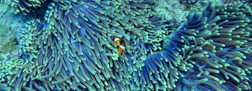 Arrecifes de coral, en peligro ante el cambio climático