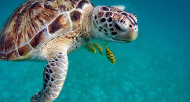 ¿Por qué están desapareciendo las tortugas?