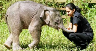 'Diana's death a great loss to Ministry and wildlife'