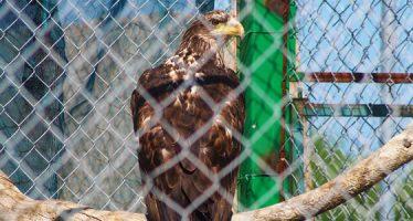 Rehabilitación y conservación de fauna silvestre en Baja California Sur